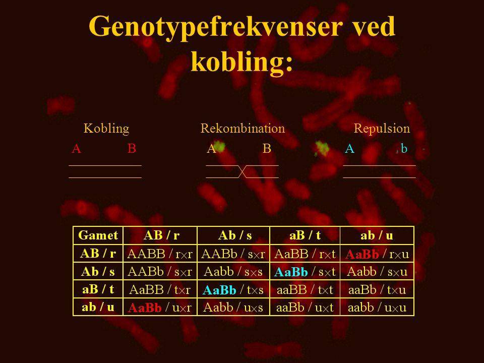 Genotypefrekvenser ved kobling: