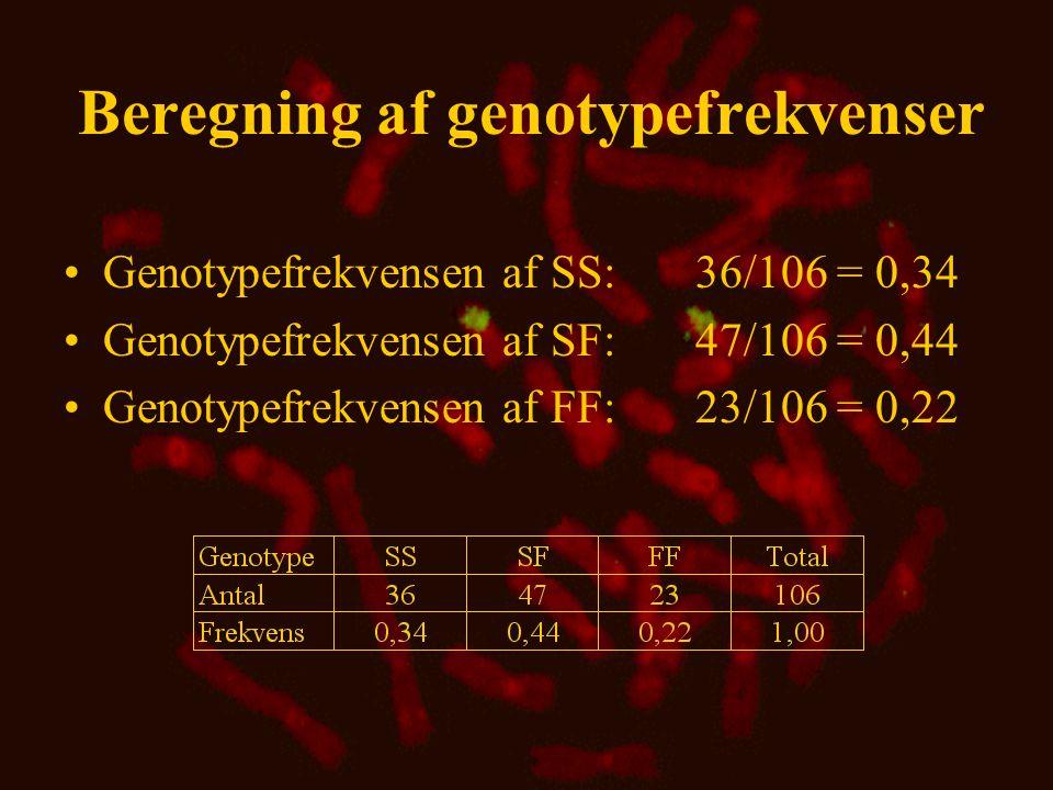 Beregning af genotypefrekvenser
