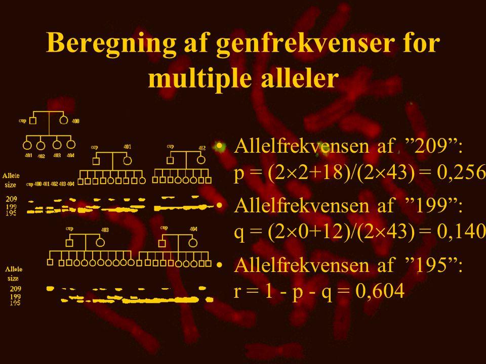 Beregning af genfrekvenser for multiple alleler