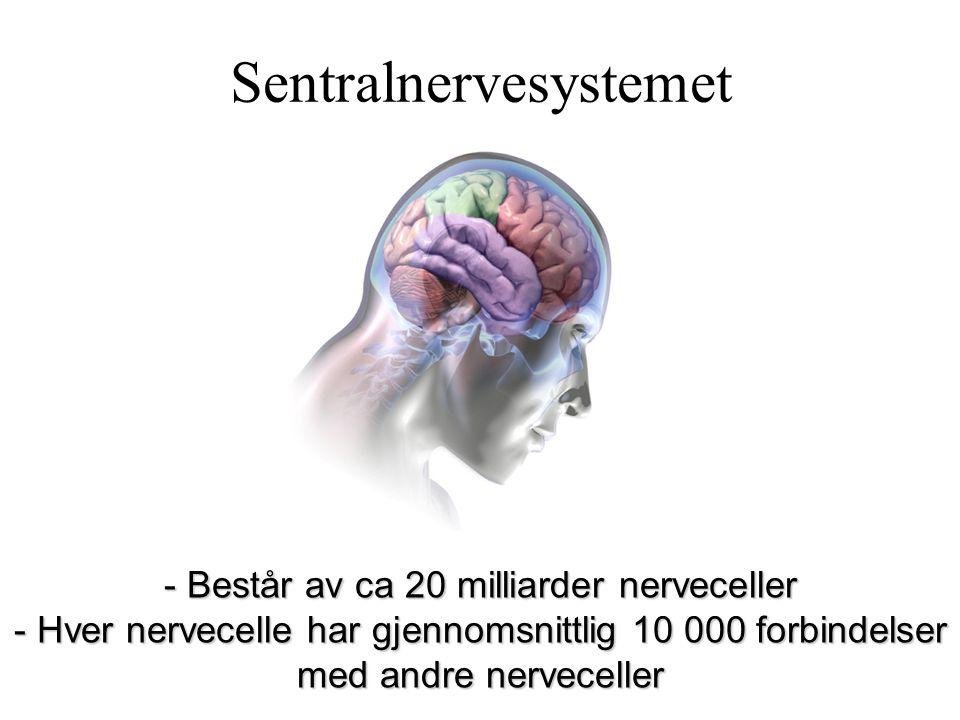 Sentralnervesystemet