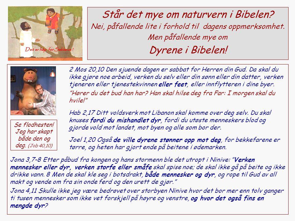 Står det mye om naturvern i Bibelen