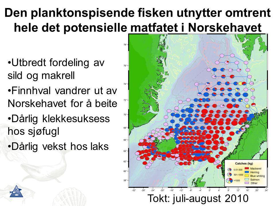 Den planktonspisende fisken utnytter omtrent hele det potensielle matfatet i Norskehavet