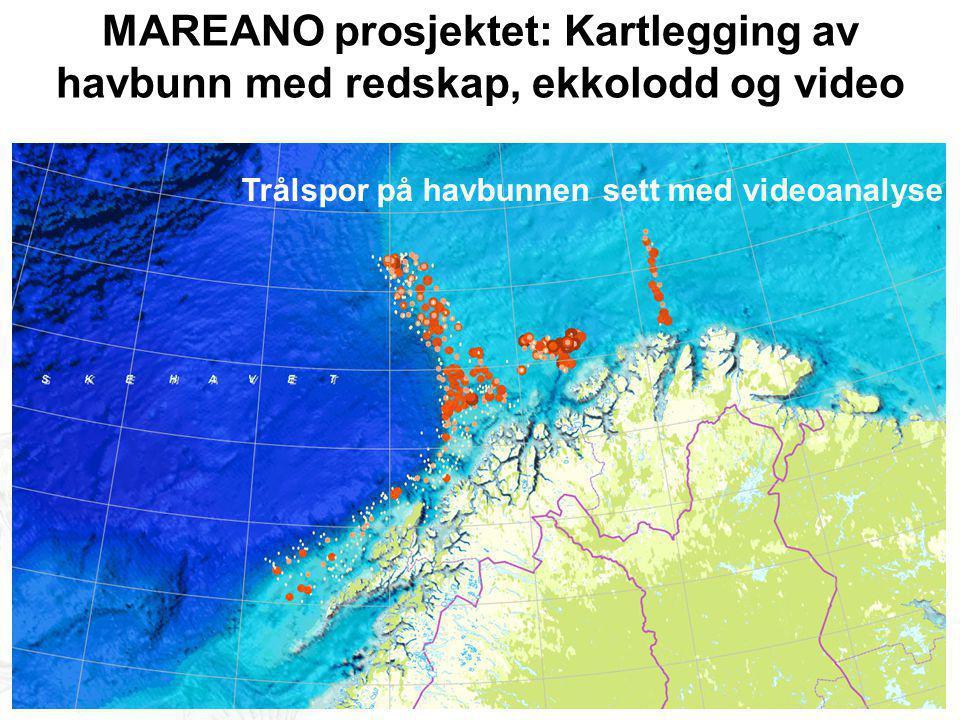 MAREANO prosjektet: Kartlegging av havbunn med redskap, ekkolodd og video