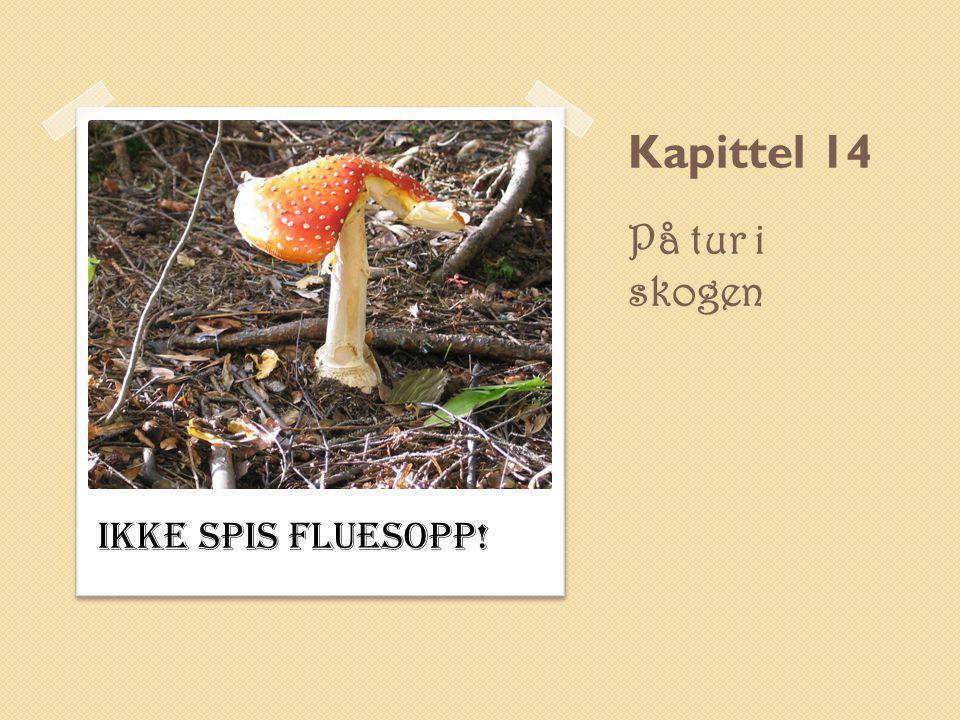 Kapittel 14 På tur i skogen