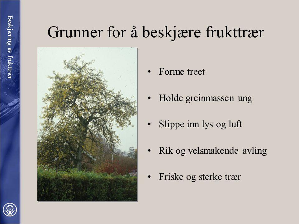 Grunner for å beskjære frukttrær