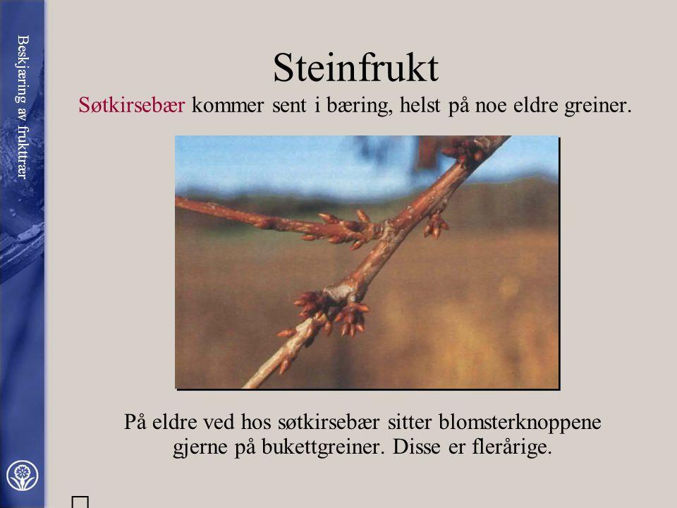 Steinfrukt Søtkirsebær kommer sent i bæring, helst på noe eldre greiner.