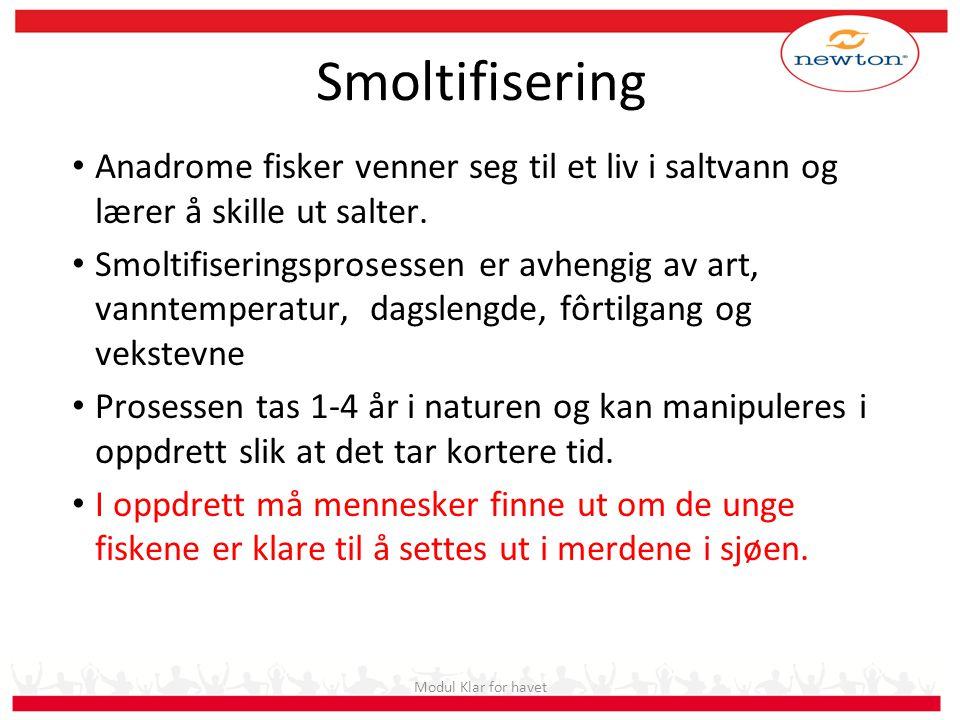 Modul 1006 Smoltkvalitet Smoltifisering. Anadrome fisker venner seg til et liv i saltvann og lærer å skille ut salter.
