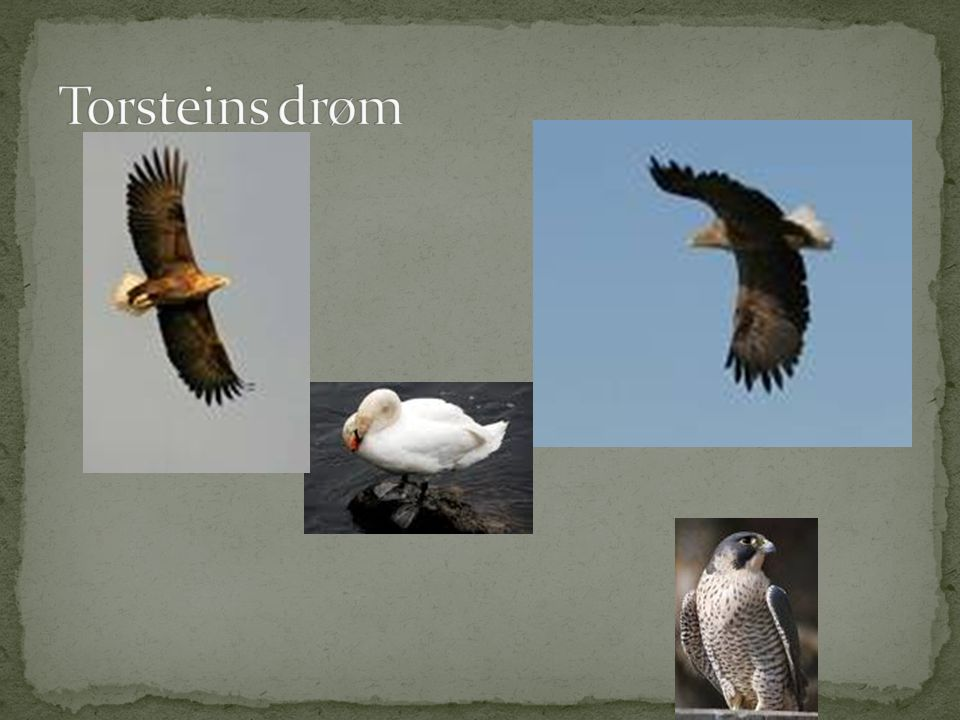 Torsteins drøm