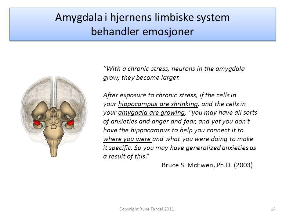 Amygdala i hjernens limbiske system behandler emosjoner