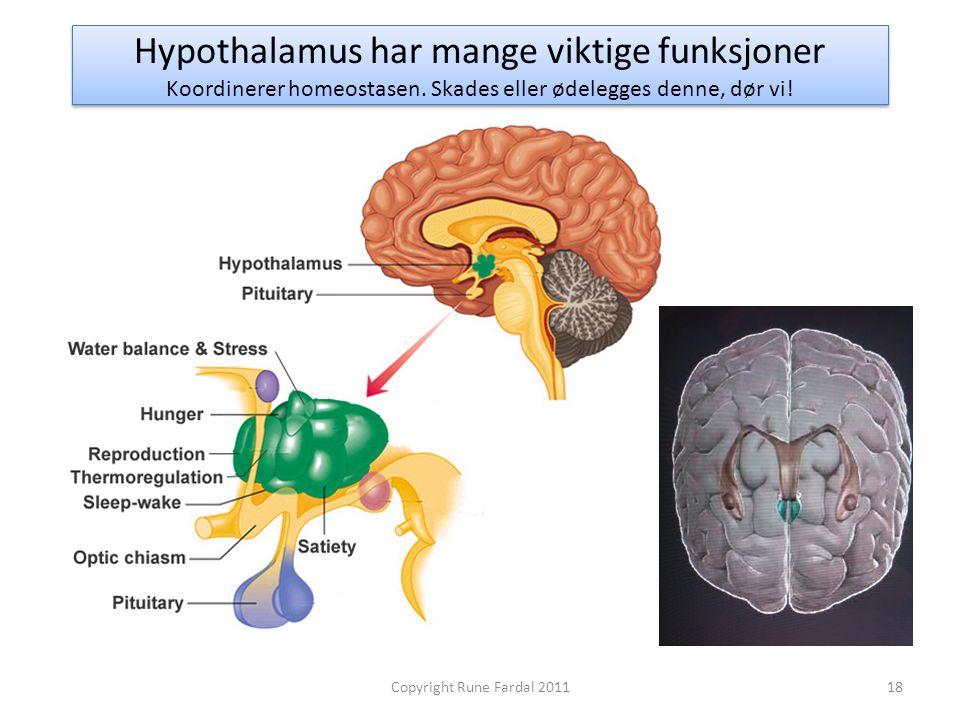 Hypothalamus har mange viktige funksjoner Koordinerer homeostasen