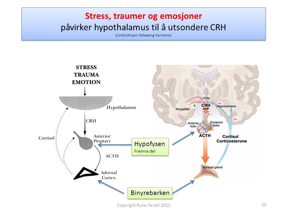 Stress, traumer og emosjoner påvirker hypothalamus til å utsondere CRH (Corticotropin Releasing Hormone)
