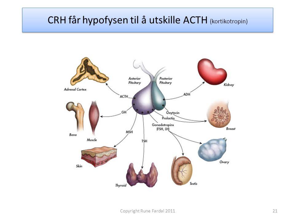 CRH får hypofysen til å utskille ACTH (kortikotropin)