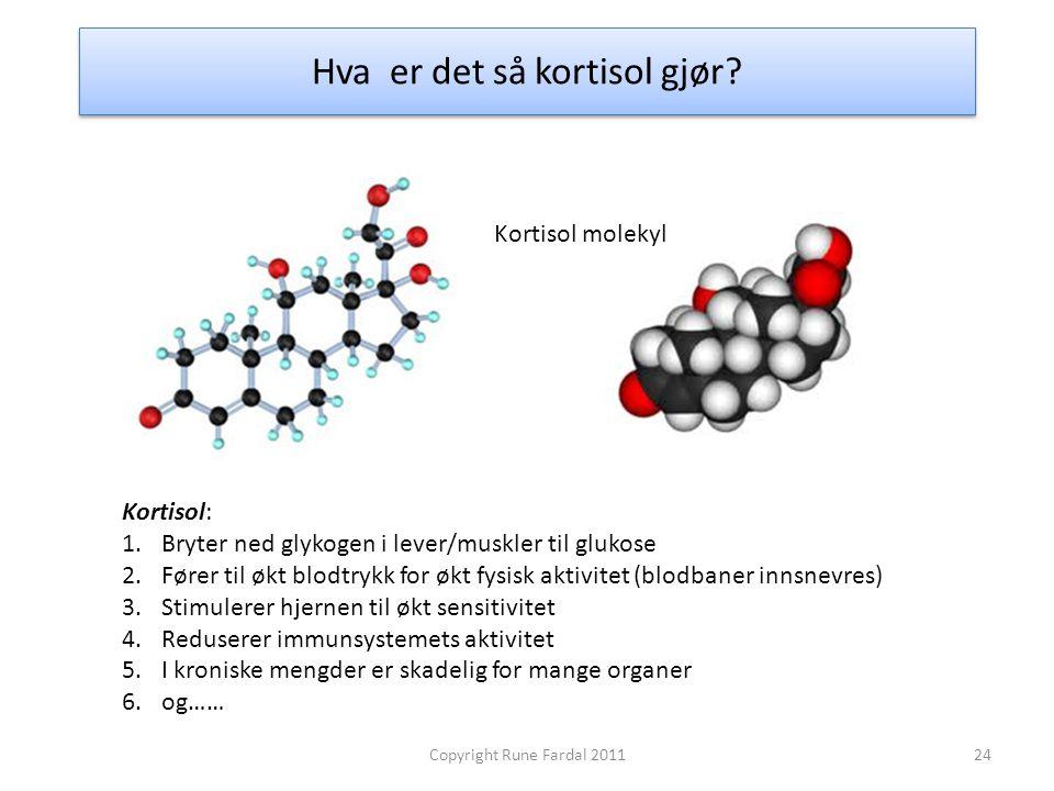 Hva er det så kortisol gjør