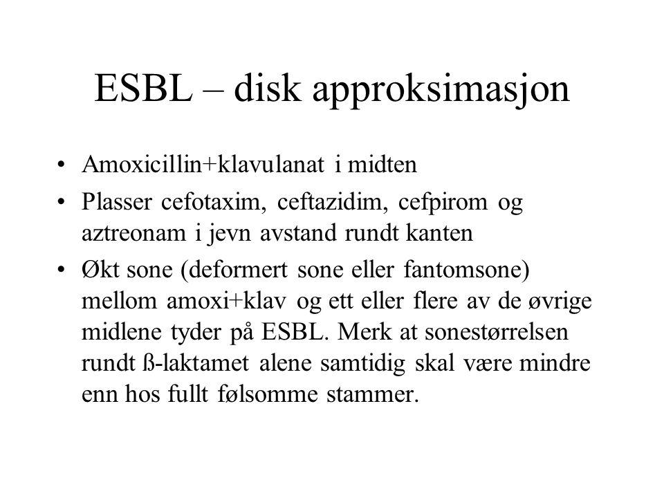 ESBL – disk approksimasjon