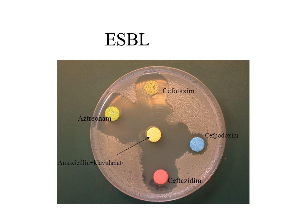 ESBL Cefotaxim Aztreonam Cefpodoxim Amoxicillin+klavulanat Ceftazidim