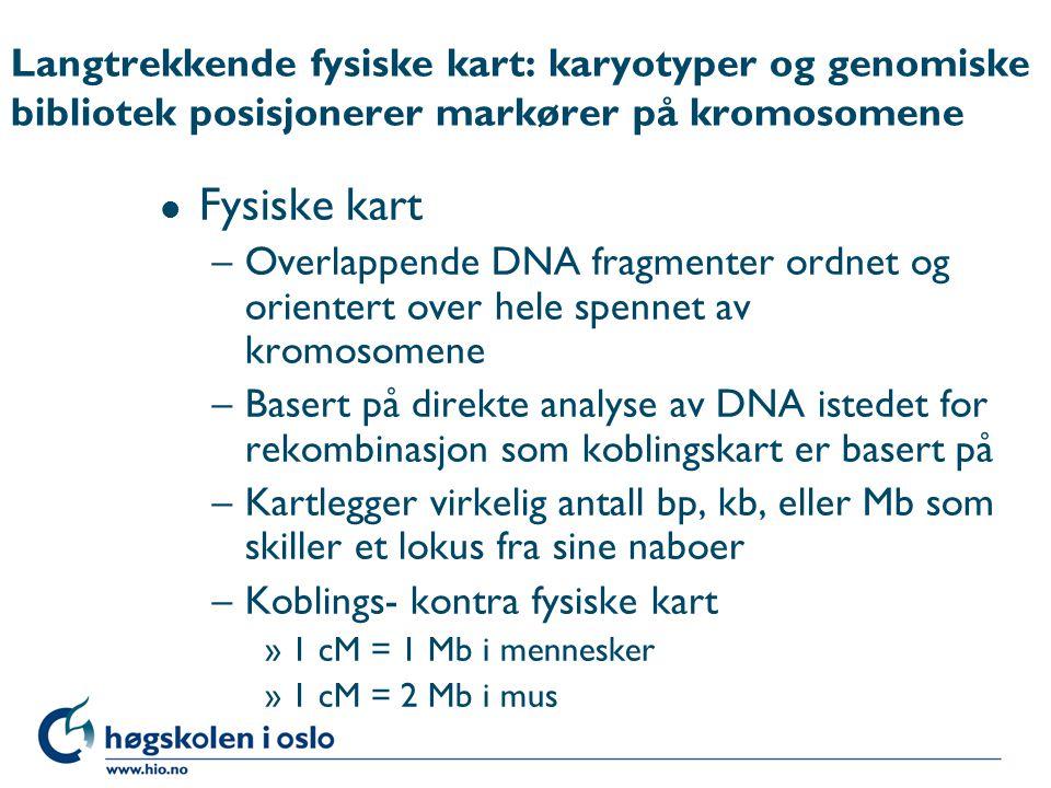 Langtrekkende fysiske kart: karyotyper og genomiske bibliotek posisjonerer markører på kromosomene