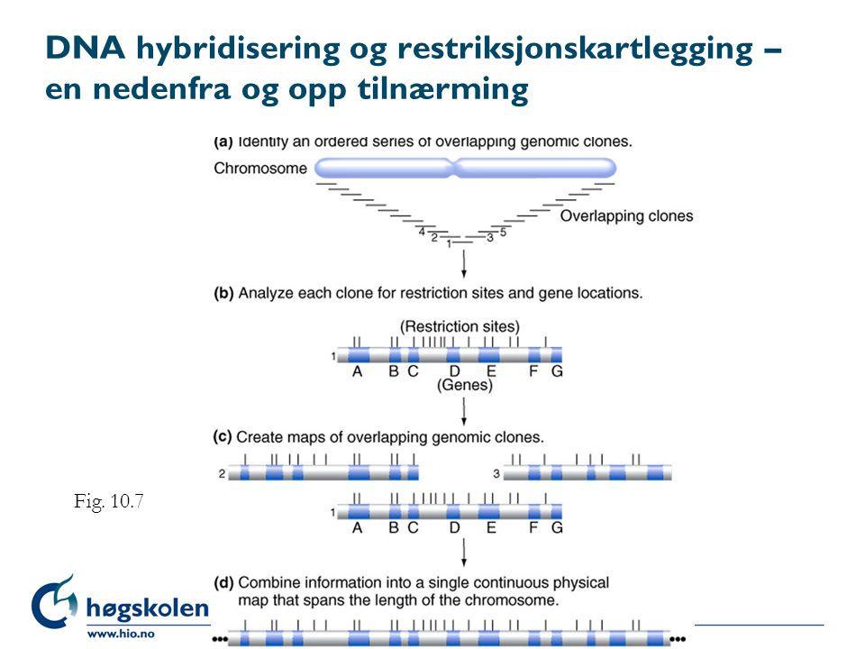 DNA hybridisering og restriksjonskartlegging – en nedenfra og opp tilnærming