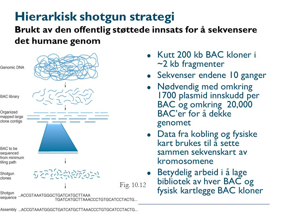 Hierarkisk shotgun strategi Brukt av den offentlig støttede innsats for å sekvensere det humane genom