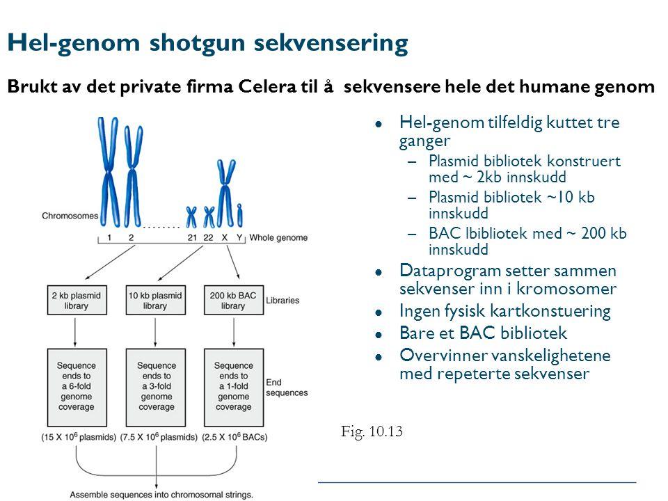 Hel-genom shotgun sekvensering Brukt av det private firma Celera til å sekvensere hele det humane genom