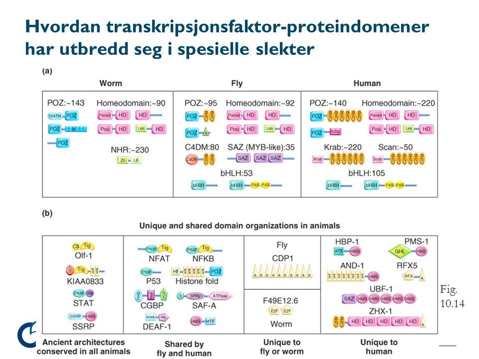 Hvordan transkripsjonsfaktor-proteindomener har utbredd seg i spesielle slekter