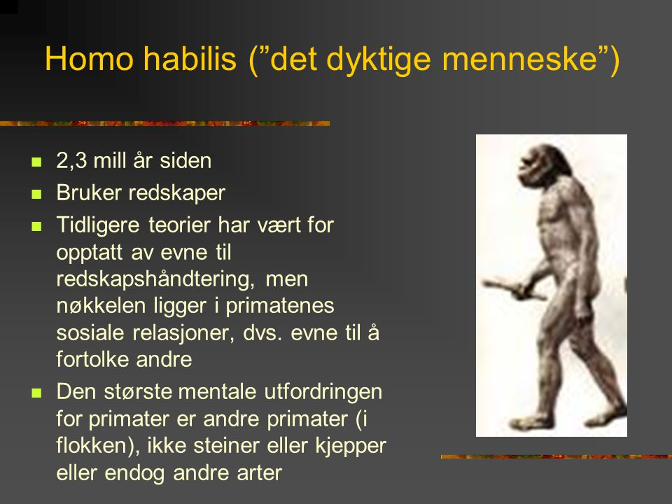Homo habilis ( det dyktige menneske )