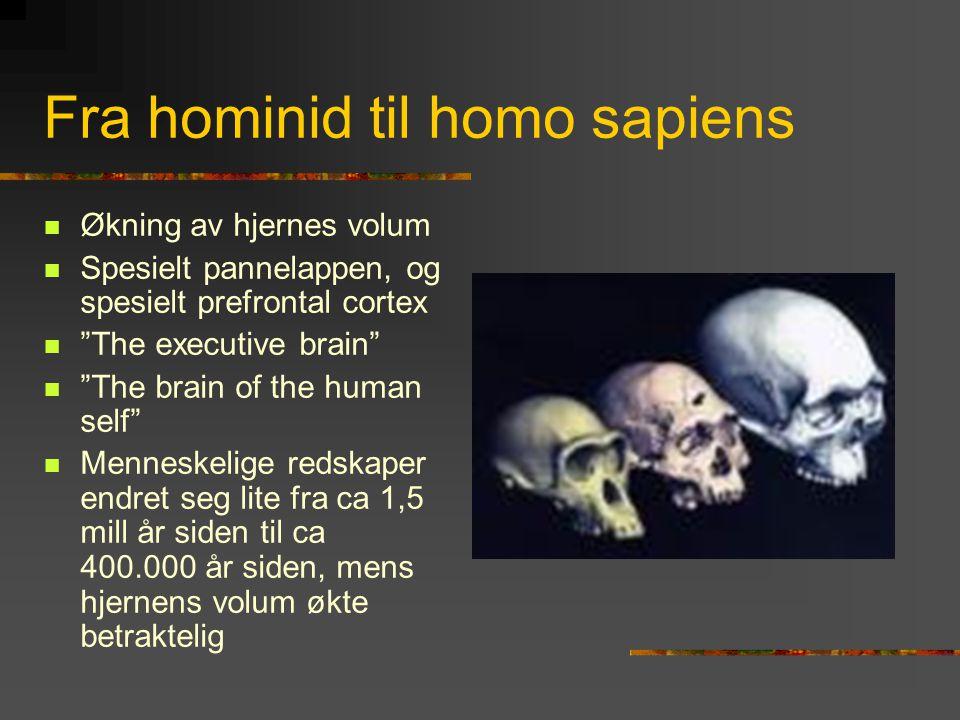 Fra hominid til homo sapiens