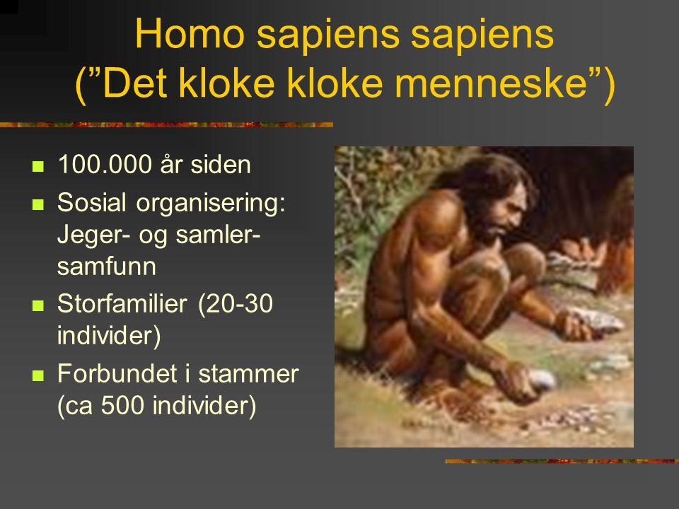 Homo sapiens sapiens ( Det kloke kloke menneske )