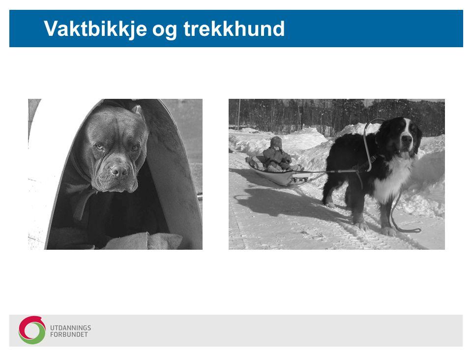 Vaktbikkje og trekkhund