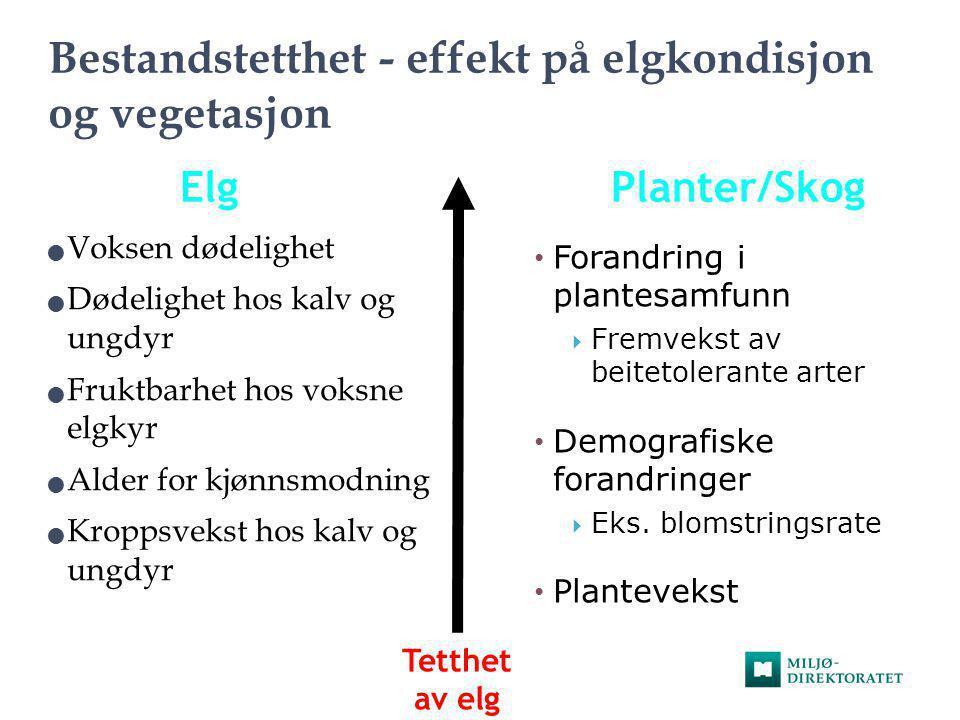 Bestandstetthet - effekt på elgkondisjon og vegetasjon