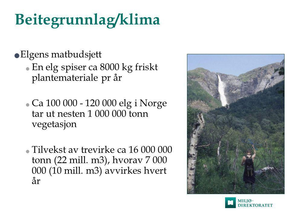 Beitegrunnlag/klima Elgens matbudsjett