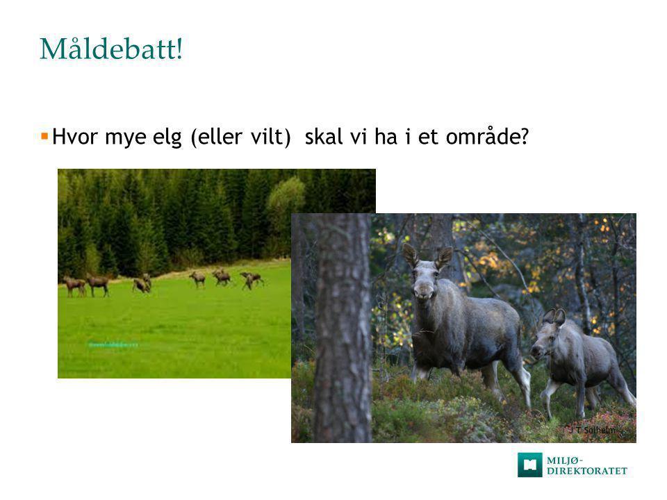 Måldebatt! Hvor mye elg (eller vilt) skal vi ha i et område