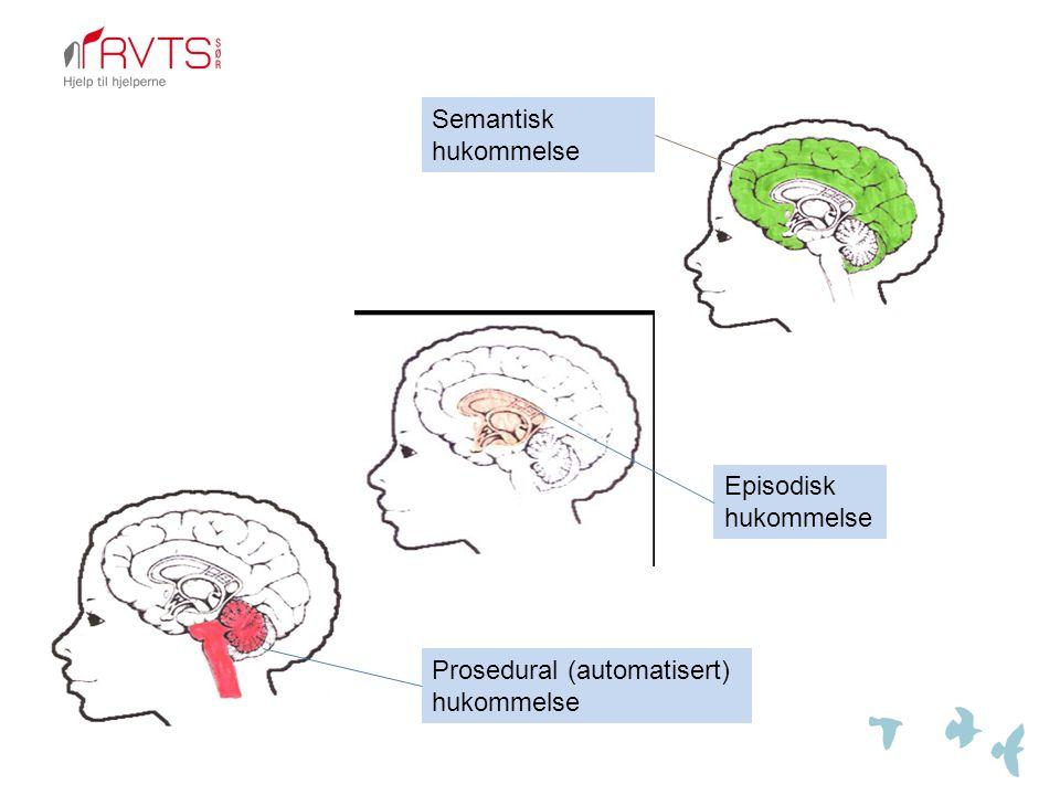 Semantisk hukommelse Episodisk hukommelse Prosedural (automatisert) hukommelse