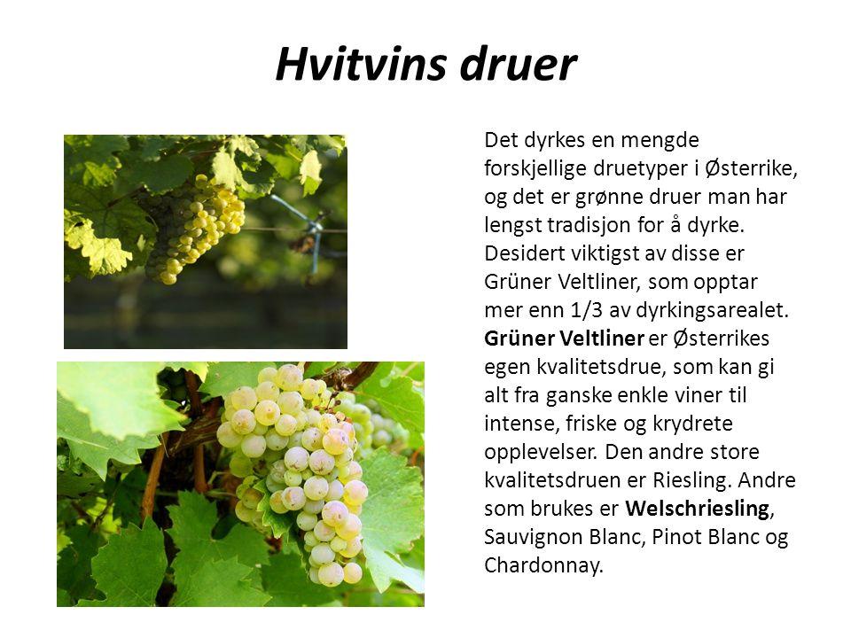 Hvitvins druer