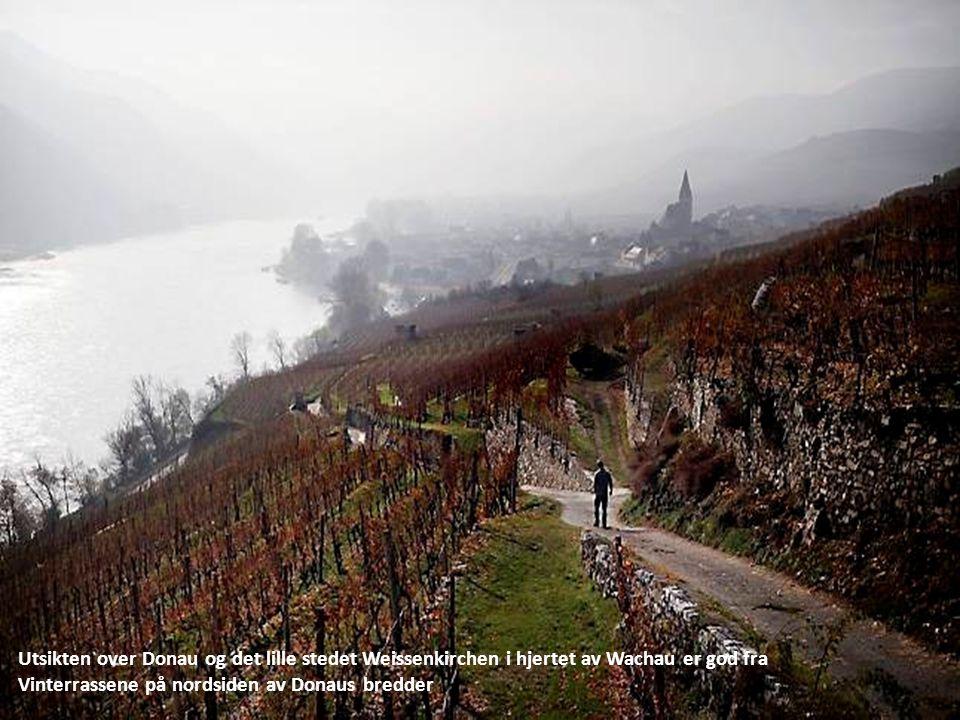 Utsikten over Donau og det lille stedet Weissenkirchen i hjertet av Wachau er god fra
