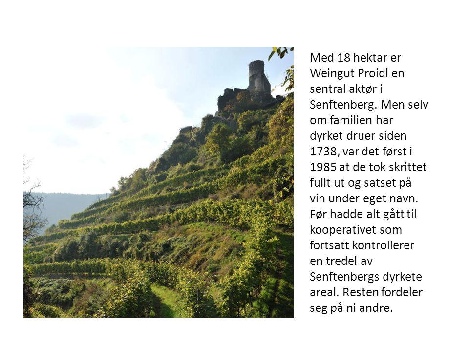 Med 18 hektar er Weingut Proidl en sentral aktør i Senftenberg