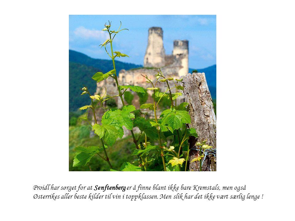 Proidl har sørget for at Senftenberg er å finne blant ikke bare Kremstals, men også Østerrikes aller beste kilder til vin i toppklassen.