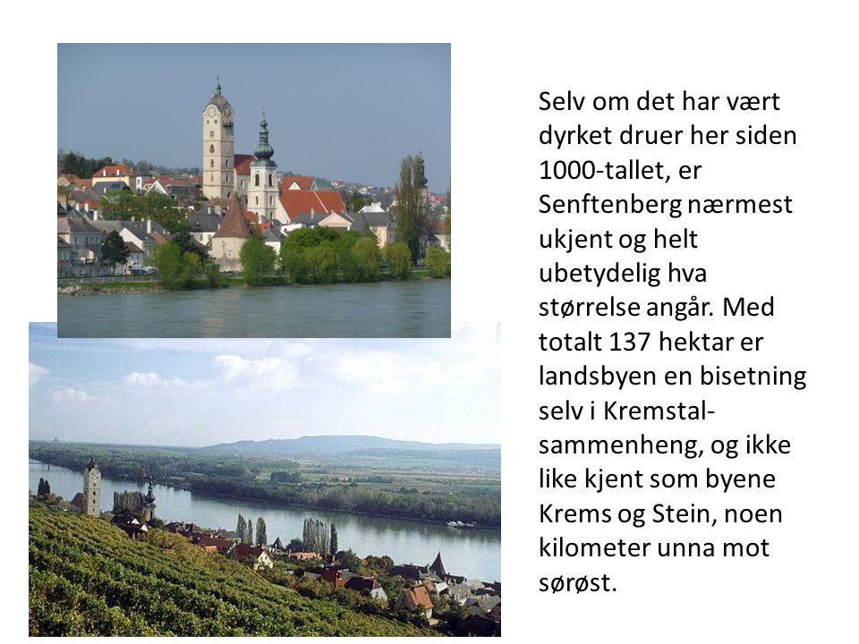 Selv om det har vært dyrket druer her siden 1000-tallet, er Senftenberg nærmest ukjent og helt ubetydelig hva størrelse angår.