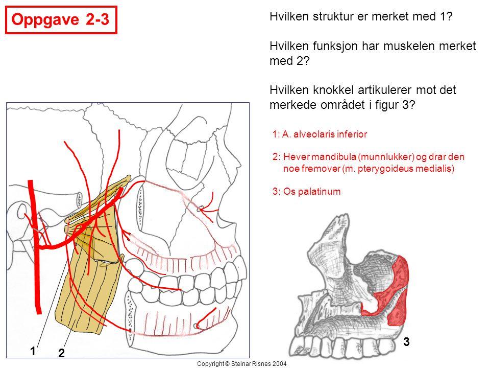 Oppgave 2-3 Hvilken struktur er merket med 1