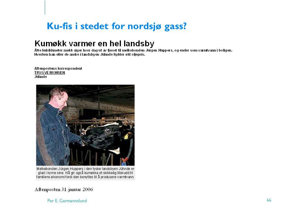 Ku-fis i stedet for nordsjø gass