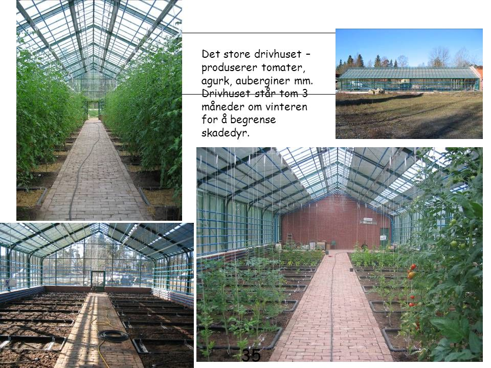 35 Det store drivhuset – produserer tomater, agurk, auberginer mm.
