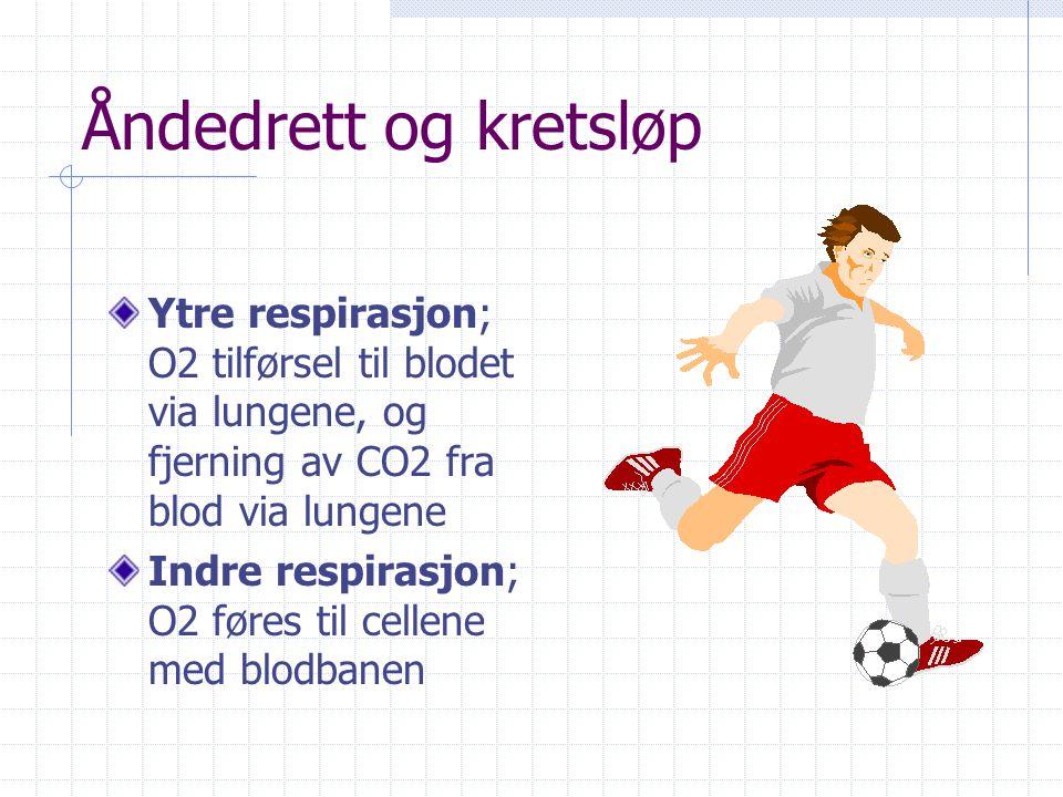 Åndedrett og kretsløp Ytre respirasjon; O2 tilførsel til blodet via lungene, og fjerning av CO2 fra blod via lungene.