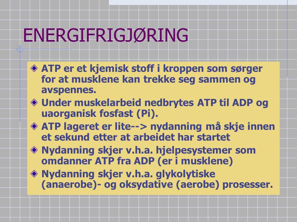 ENERGIFRIGJØRING ATP er et kjemisk stoff i kroppen som sørger for at musklene kan trekke seg sammen og avspennes.
