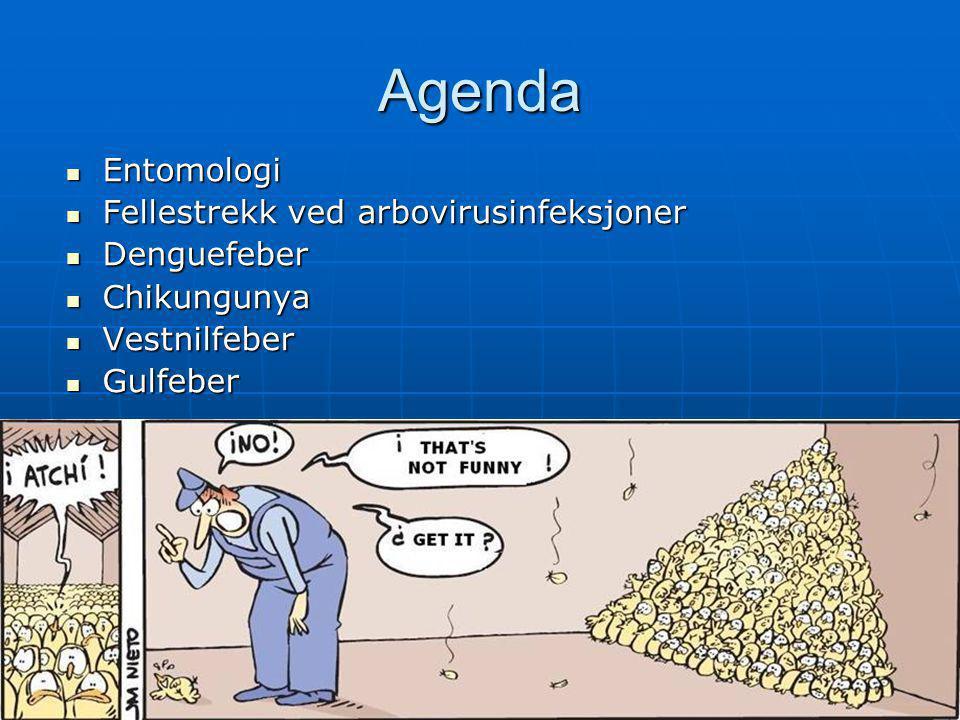 Agenda Entomologi Fellestrekk ved arbovirusinfeksjoner Denguefeber