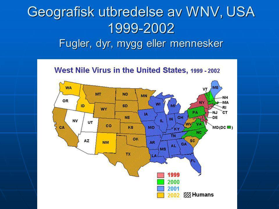 Geografisk utbredelse av WNV, USA 1999-2002 Fugler, dyr, mygg eller mennesker