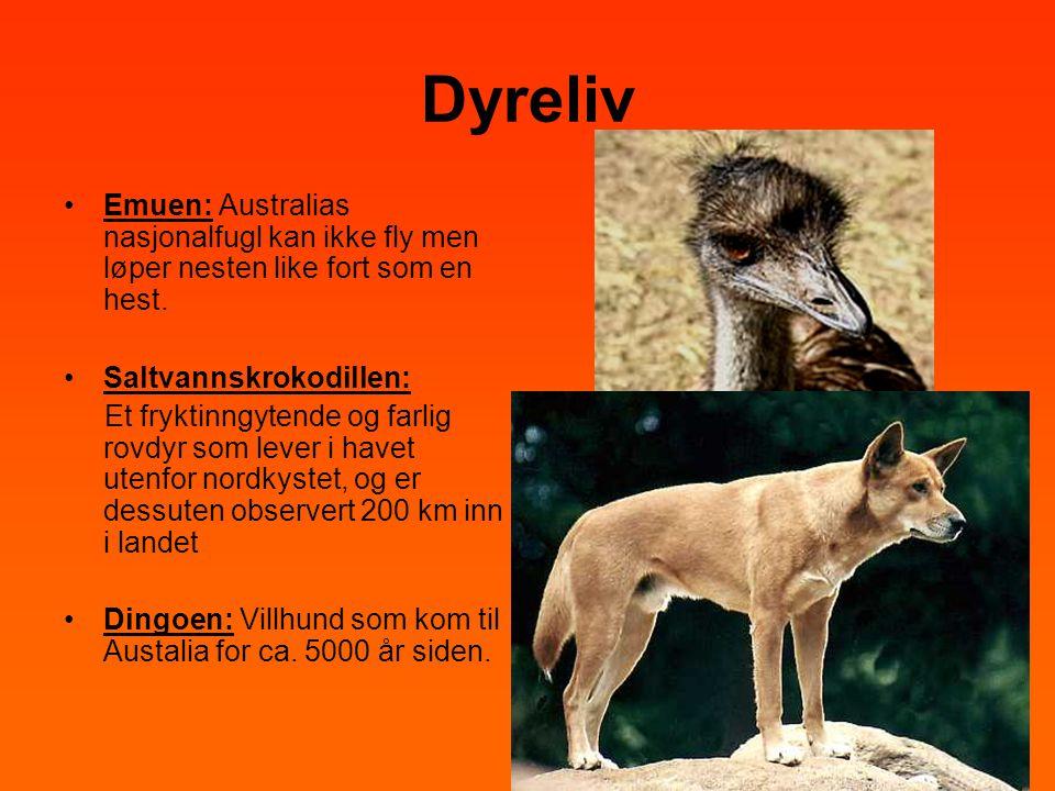 Dyreliv Emuen: Australias nasjonalfugl kan ikke fly men løper nesten like fort som en hest. Saltvannskrokodillen: