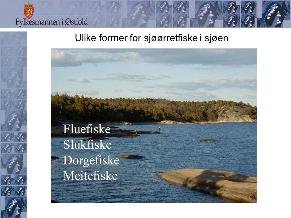 Ulike former for sjøørretfiske i sjøen
