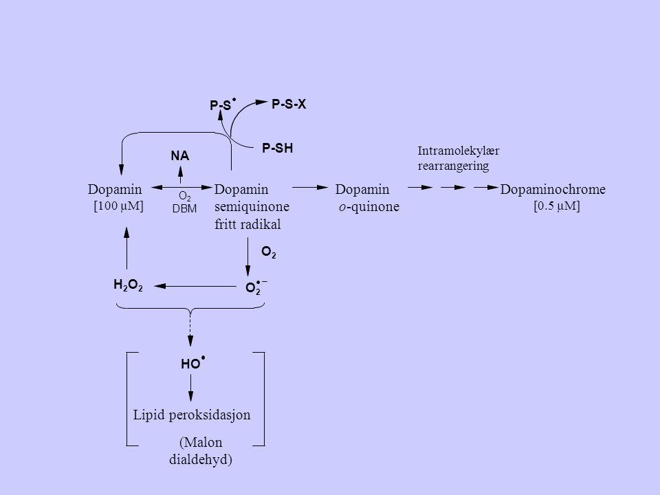 Dopamin Dopamin semiquinone fritt radikal Dopamin o-quinone