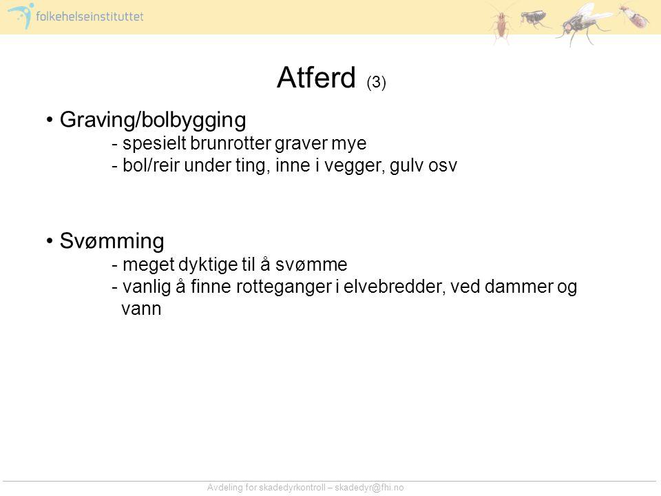 Atferd (3) Graving/bolbygging Svømming