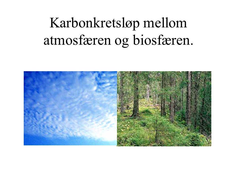 Karbonkretsløp mellom atmosfæren og biosfæren.