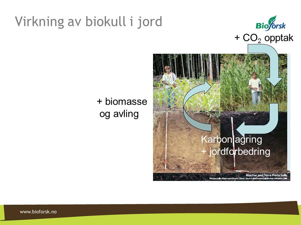 Virkning av biokull i jord